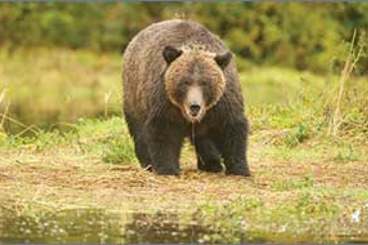 The Great Bear Rainforest in BC is an example of a successful land use agreement (Photo courtesy Greenpeace)